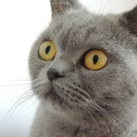 cat-eyes-view-face-66292