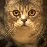 cat-eyes-portrait-cat-eyes-160486