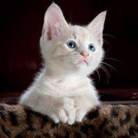 kitty-cat-kitten-pet-45201